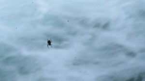 little spider on the water in Montana: